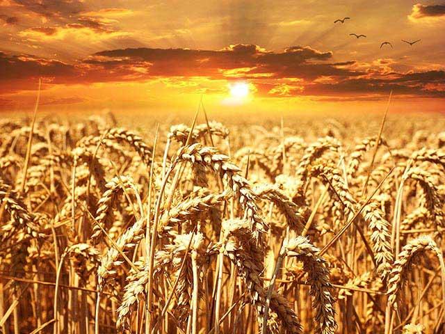organic livestock feed