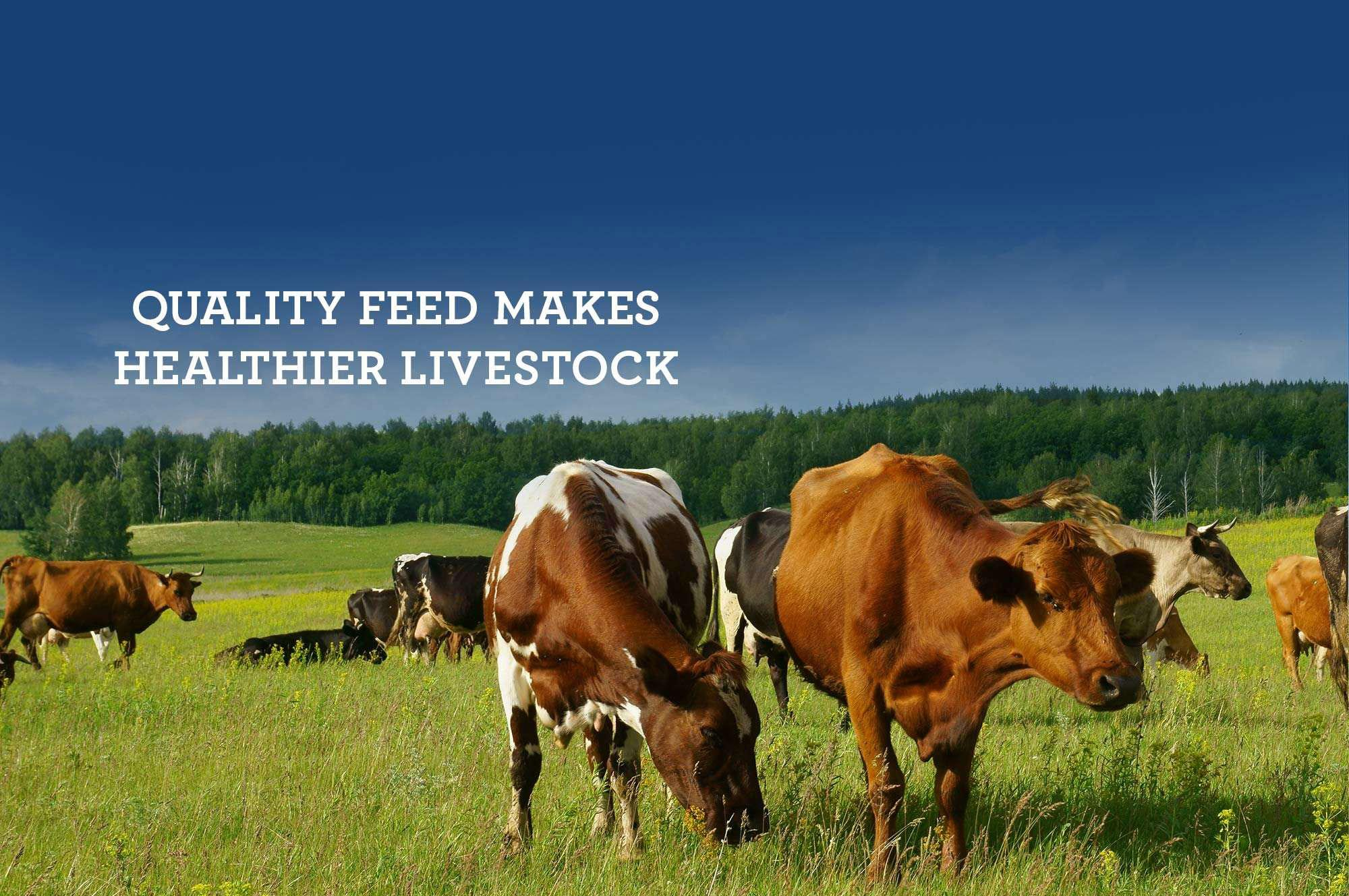 Where to buy - Quality feed makes healthier livestock