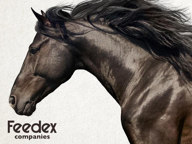 Horse Feeding Tips-Organic Livestock Feed Suppliers-Organic Horse Feed-Feedex Companies
