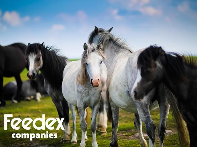 Horse-Feeding-Mistakes-Organic-Livestock-Feed-Feedex